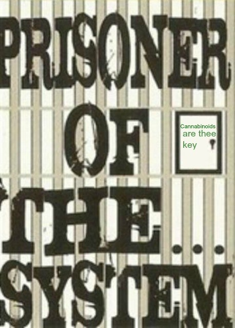 prisoner of the system2