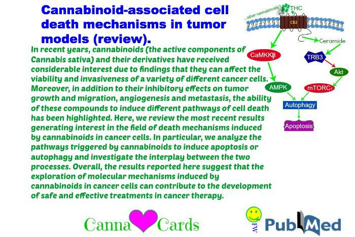 cannabinoid review