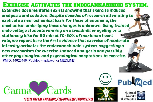 Exercise activates the endocannabinoid system.